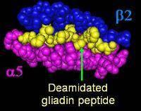 deaminated gliadin