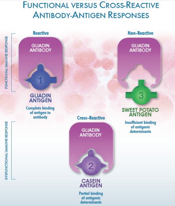 FUNCTIONAL VERSUS CROSS REACTIVE ANTIBODY ANTIGEN RESPONSES resized 600