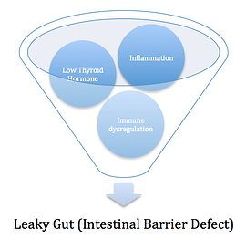 Leaky Gut Development