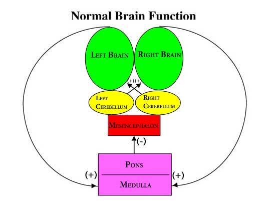 BBT Normal Brain