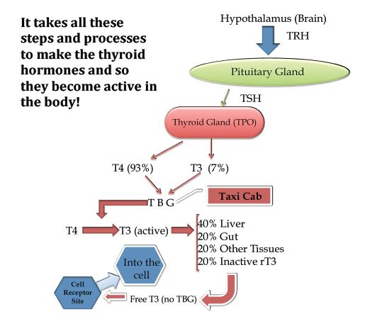 Steps For Proper Thyroid Function