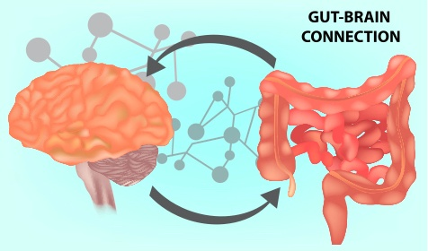 AdobeStock_Gut-Brain-Connection.jpeg