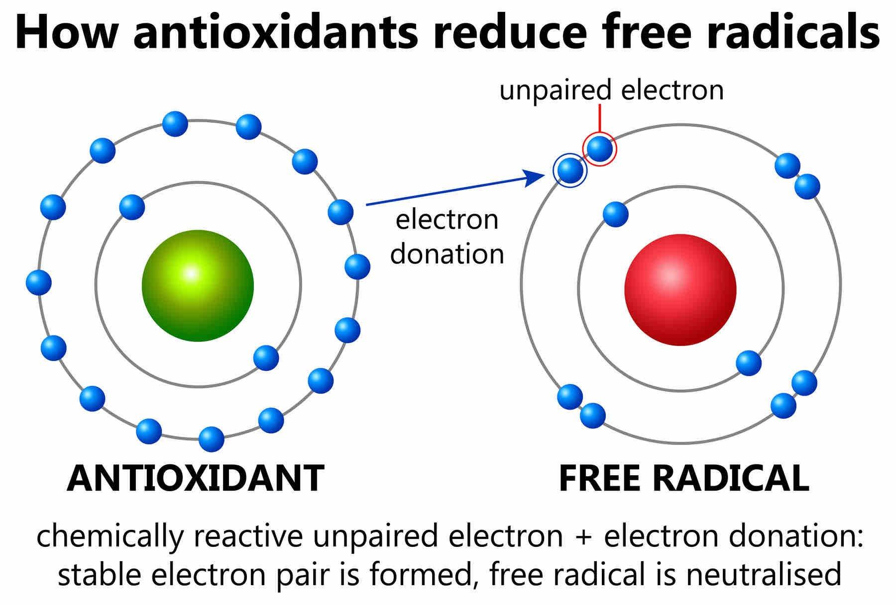 AdobeStock_How_Antioxidants_Reduce_Free_Radicals-blog