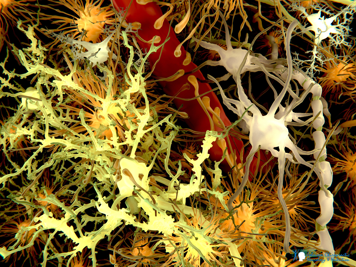 AdobeStock_blood-brain-barrier-JCNN-1200.png