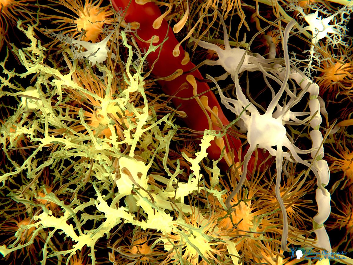 AdobeStock_blood-brain-barrier-JCNN-1200.png