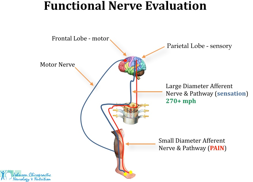 Functional Nerve Evaluation For Foot Pain